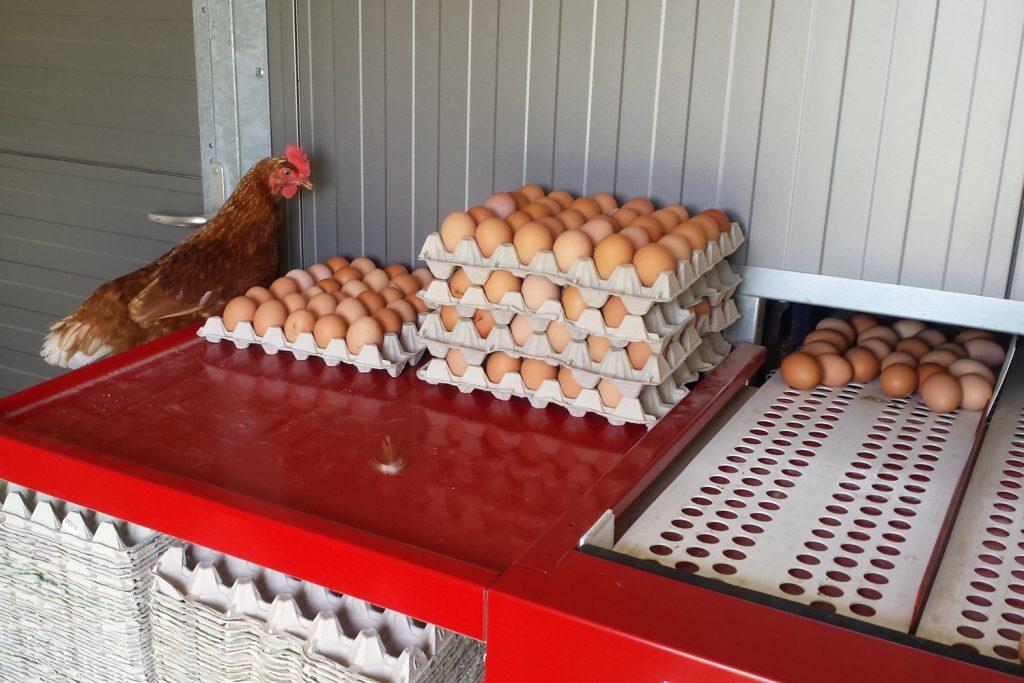 Frische Eier von Hühnern vom Eierhof Nindorf